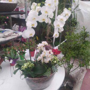 Arranjo de Phalaenopsis Branco